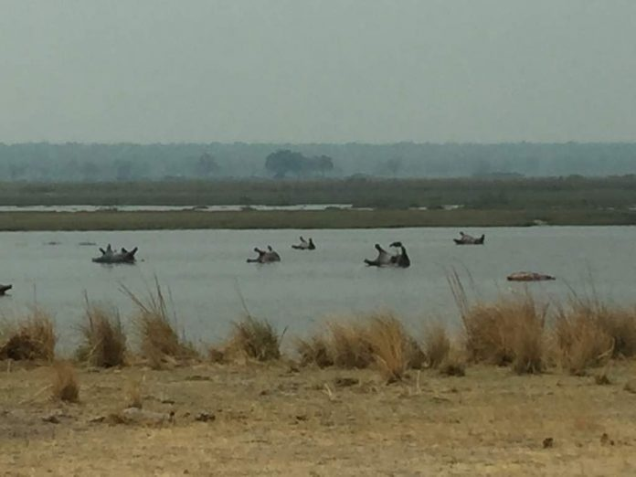 Namibia: More than 100 hippos die in suspected anthrax outbreak